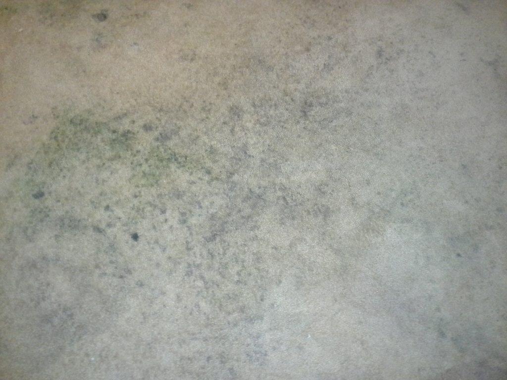 Mold Carpet Carpet Vidalondon